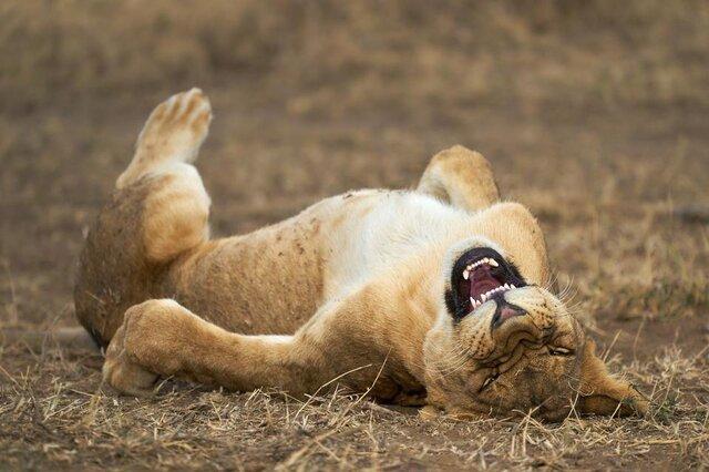 نگاهی به عکسهای کمدی برگزیده از حیاتوحش