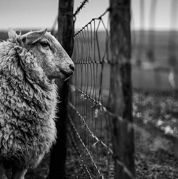 نگاهی بر آثار منتخب رقابت سالانه عکاس منظره انگلستان
